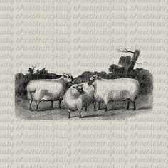 Antique Sheep Farm Animal Image Digital Download Image Transfer to Fabric, Paper Crafts, Collage, Burlap, Pillows,Totes, Tea Towel, Wall Art...