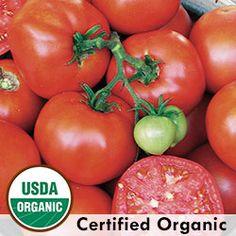 A standard early organic tomato originally developed in New Jersey and introduced in 1900 by Johnson and Stokes. Produces flavorful tomatoes in 80 days from transplant. Open Pollinated, non-gmo, tomato seeds Organic Mulch, Organic Seeds, Grow Organic, Organic Farming, Tomato Vine, Tomato Garden, Tomato Plants, Sage Garden, Growing Tomatoes