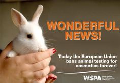 Today The European Union Bans Animal Testing For Cosmetics Forever! Stop Animal Cruelty, Animal Testing, 100 Happy Days, Animal Welfare, Animal Rights, Madame, Cruelty Free, Good News, The Help