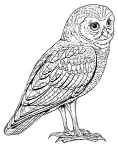 retro owl coloring pages | butterfly clip art | ... Free Black and White Flying ...