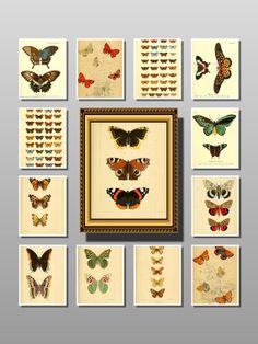 butterfly print butterfly poster butterfly paper by uniquevintagee, $3.99