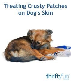 Treating Crusty Patches on Dog's Skin This is a guide about dog has dry, crusty skin patches. You want to find a safe and effective treatment for your dog's skin problems. Coconut Oil Dogs Skin, Dog Health Tips, Pet Health, Dog Food Recall, Dog Leg, Patches, Dog Teeth, Skin Problems, Dog Care