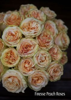 The Peach Rose Study - Finesse Peach Roses