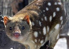 30 Mammals You've Probably Never Heard Of But Should