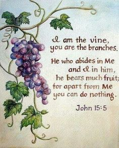 I am the vine u r the branches