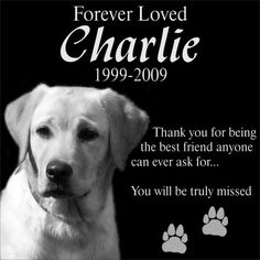 Personalized Pet Dog Cat Memorial 12x12 Engraved Black Granite Grave Marker Head Stone Plaque CHA1 * Check out the image by visiting the link.