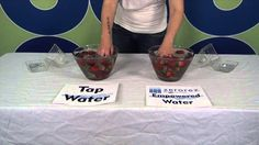 Strawberry Cleaning! We cleaned strawberries in tap water and in our Empowered Water™. You have got to see the difference! #EmpoweredWater #StrawberryCleaning #zerorezphx