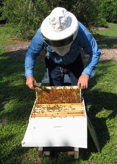 Setting up an Urban bee hive