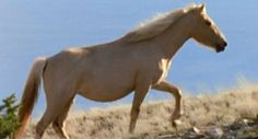 Cloud, wild stallion of the rockies. Amazing PBS documentary about wild horses living in the Rockies.