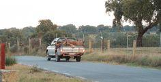 La Fiscalía investiga una montería ilegal organizada en el Parque Nacional de Monfragüe http://www.rural64.com/st/turismorural/La-Fiscalia-investiga-una-monteria-ilegal-organizada-en-el-Parque-Naci-5326