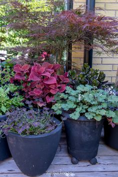 Tip-Top Trailing Plants For Containers – The Gardening Spot Big Plants, Exotic Plants, Types Of Plants, Tropical Plants, Indoor Plants, Container Plants, Container Gardening, Growing Flowers, Planting Flowers