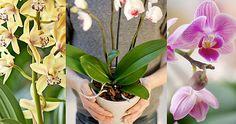 Så får du dina orkidéer att trivas – 8 tips!