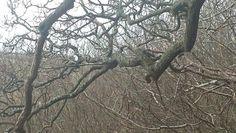 Spot the squirrel.