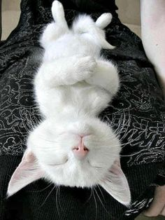 Yoga Kitteh is in the zone....