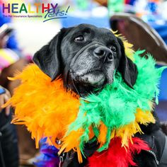 Healthy Pets celebrates Pride Month! 🏳🌈 During the month of June, Healthy Pets are proudly changing our logos to show our support and solidarity for the LGBTQ+ community. It's so important to us that our people feel listened to and supported, and that we are all #AtlantaAllies. #Pride2021 Blue Cotton Candy, Lgbt History, Three Wise Men, Pet Odors, Photo Checks, Autumn Photography, Love Pet, All Dogs, Dog Mom