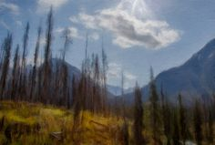 New artwork at fineartamerica.com! - 'Sun Light In The Forest' - http://fineartamerica.com/featured/sun-light-in-the-forest-eduardo-tavares.html #art #wallart  #decor #interiordesign