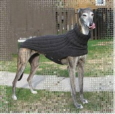 A sweater pattern for those hard-to-fit greyhounds!