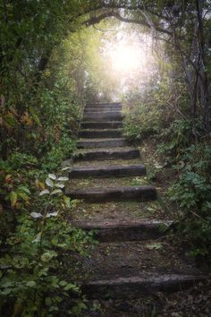 https://flic.kr/p/aAoj3e | Walk towards the light | This stairway is found in Finch Arboretum.