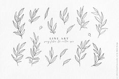 Olive branch watercolor & line art by Skyla Design on @creativemarket