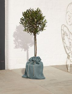 Olive Tree | M&S Hessian Bags, Indoor Olive Tree, Olive Green, Colours, Patio, Gift Ideas, Garden, Products, Garten
