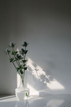 Wild Flowers: Summer Shadow - Light: By Wolves Table - Flowers.tn - Leading Flowers Magazine, Daily Beautiful flowers for all occasions Light And Shadow Photography, Still Life Photography, Nature Photography, Design Art, Photo Deco, Minimalist Photography, Arte Floral, White Aesthetic, Week Planner