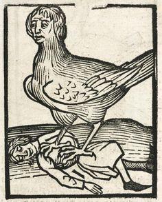 Medieval harpy woodcut