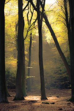 Autumn glow by Pauline Helders on - I do love the forest. Forest Path, Magic Forest, Beautiful World, Beautiful Places, Beautiful Pictures, Enchanted, Deep, Natural World, The Great Outdoors