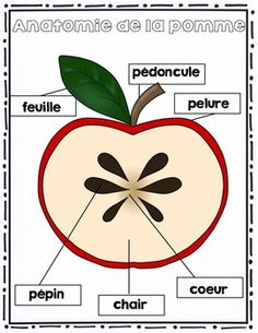 FRENCH {Apples}Math and literacy/Les pommes {maths et littératie} Preschool Learning, Montessori, Literacy, Kindergarten, Homeschool, Autumn, Activities, Math, Crafts