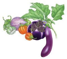 """All About Growing Eggplant"" Learn all about growing eggplant, including the best eggplant varieties, how to prevent pests, growing eggplant in containers and simple tips for cooking baba ghanouj and caponata. From MOTHER EARTH NEWS"