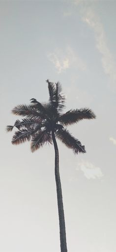 tree iPhone X wallpaper Grey Wallpaper Iphone, Palm Wallpaper, Summer Wallpaper, Aesthetic Iphone Wallpaper, Aesthetic Wallpapers, Surfing Wallpaper, Photo Wall Collage, Picture Wall, Palm Tree Pictures