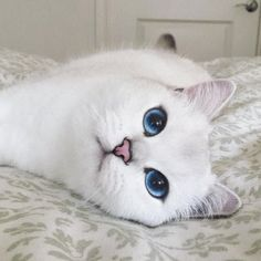 coby the cat with prettiest eyes Most Beautiful Eyes, Beautiful Cats, Animals Beautiful, Cute Animals, Prettiest Eyes, Derpy Cats, Cats And Kittens, Cat Qoutes, Tattoos For Dog Lovers