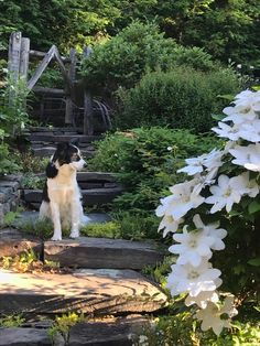 Saying Goodbye to a Beloved Garden - FineGardening Garden Images, Garden Photos, Fine Gardening, Container Gardening, I Wish You Well, Next Garden, Bloom Where Youre Planted, Back Steps
