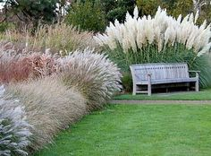 Beautiful ideas for landscaping with ornamental grasses used as an informal grass hedge, mass planted in the garden, or mixed with other shrubs and plants. Source by tina_treat ideas Garden Shrubs, Lawn And Garden, Garden Grass, Garden Club, Garden Leave, Meadow Garden, Oil Garden, Herbs Garden, Fruit Garden