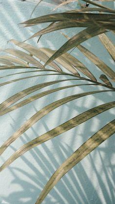 Home Garden .Home Garden Beach Aesthetic, Blue Aesthetic, Aesthetic Photo, Aesthetic Pictures, Aesthetic Collage, Aesthetic Gif, Aesthetic Clothes, Plant Wallpaper, Summer Wallpaper