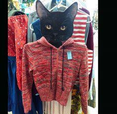 Catsweat