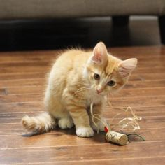 Cats Toys Ideas - Your cat will love these easy homemade cat toys made from wine corks - Ideal toys for small cats Homemade Cat Toys, Diy Cat Toys, Pet Toys, Cat Litter Mat, Guinea Pig Toys, Ideal Toys, Animal Projects, Diy Projects, Small Cat