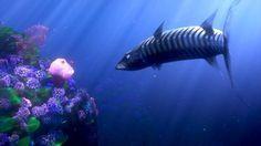 *BARRACUDA ~ Finding Nemo, 2003