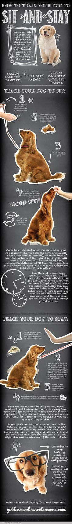 #INFOGRAPHIC: Train Your Dog to Sit & Stay (by Golden Meadows Retrievers) #Dogs