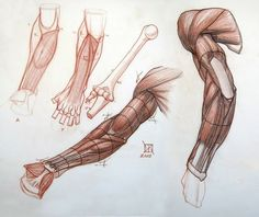 Enjoy a collection of references for Character Design: Arms Anatomy. The collection contains illustrations, sketches, model sheets and tutorials…