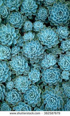 Wallpaper sperrbildschirm green new ideas Wallpaper Flower, Succulents Wallpaper, Blue Succulents, Plant Wallpaper, Planting Succulents, Planting Flowers, Indoor Succulents, Phone Backgrounds, Wallpaper Backgrounds