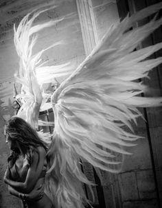 Angel wings by jillian