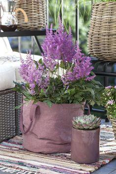 Med astilbe i rosa Grow-in får du en luftig og sommerlig stil på terrassen.