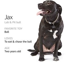 Image of a dog named Jax