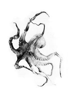Alexis Marcou - Octopus