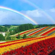 Most Beautiful Gardens, Beautiful World, Beautiful Images, Scenery Pictures, Cool Pictures, Rainbow Sky, Beautiful Flowers Wallpapers, Color Of Life, Science And Nature