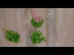 Finn smakfulle oppskrifter på salater som passer til lunsj og middag, eller tilbehør til andre retter. F.eks. pastasalat, kyllingsalat og cæsarsalat. Plants, Planters, Plant, Planting, Planets