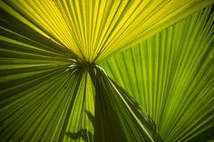 #Inhotim #VerdeSolar  #Natureza #Inspiração #Texturas #FeitoNoBrasil #MenosTendênciaMaisEssência