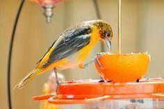 Veja aqui dicas simples de como atrair pássaros para o jardim ou o quintal!