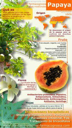 Infografía. Resumen de las características generales de la planta de Papaya. Usos medicinales más comunes, propiedades y beneficios de la papaya.