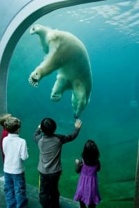Tickets to the Columbus Zoo & Aquarium - America's #1 zoo - are part of the Roar and Explore Getaway Package - 2 nights, 3 great attractions starting at $369!